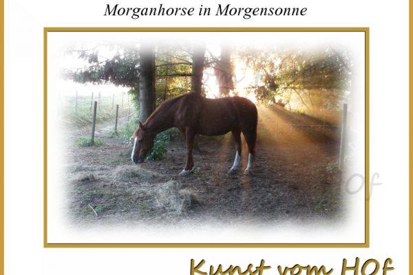 Morgan-horse in Morgensonne
