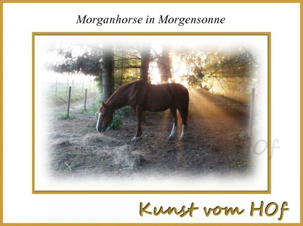 Morgan-horse in Morgensonne