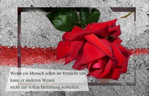 Rosenblut